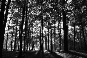 huntsville-state-park