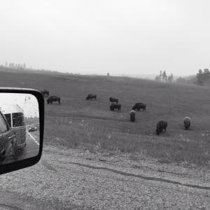 Buffalo Gap