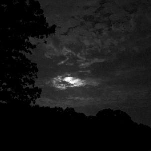 Loyd Park Moon